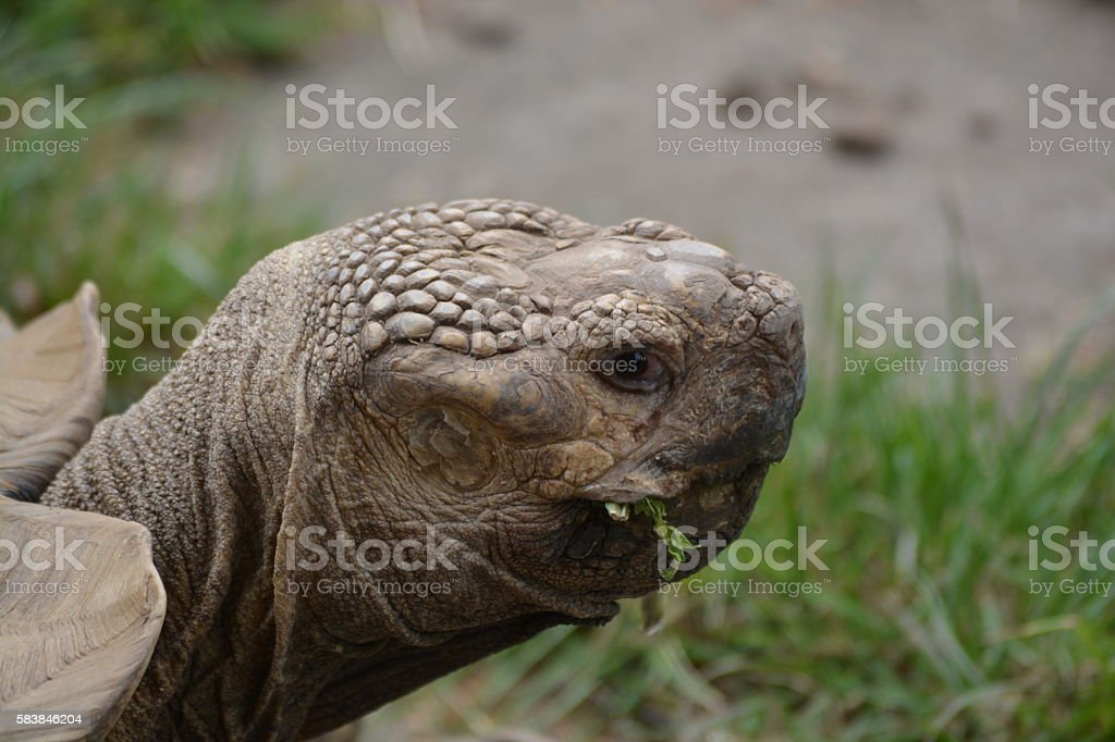 Old tortoise close-up stock photo