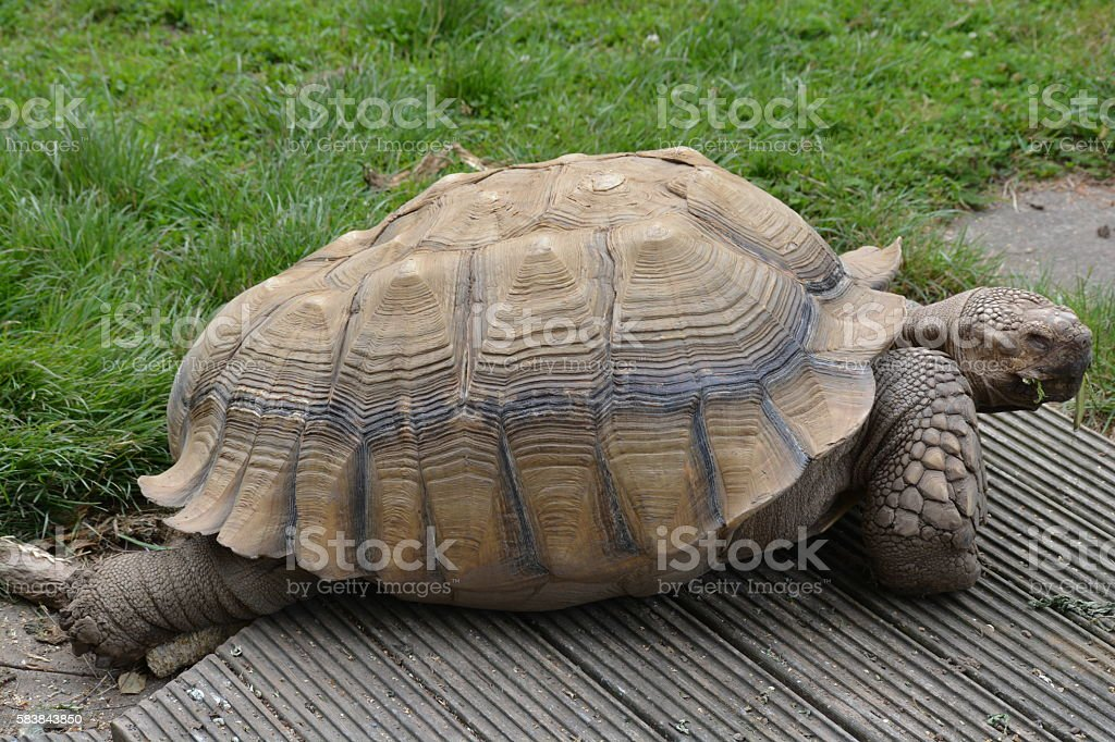 Old tortoise stock photo