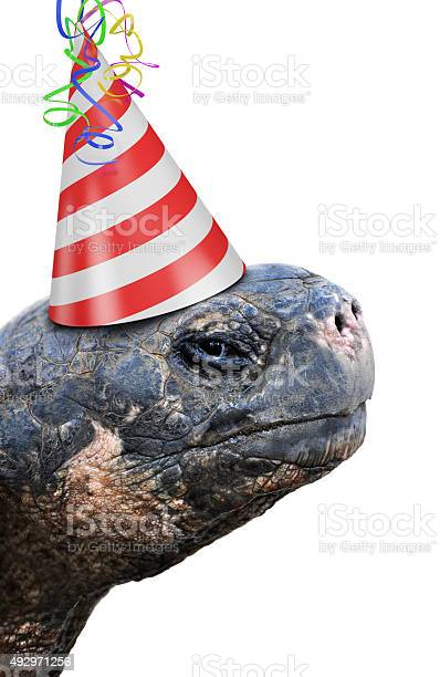 Old tortoise wearing red and white striped birthday party hat picture id492971256?b=1&k=6&m=492971256&s=612x612&h=squpydkbffbai3uadzqh31pb3xx xjiq4bumqouejwm=