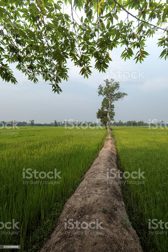 Old Traditional Rice Field Bamboo Hut Agriculture And Farming L