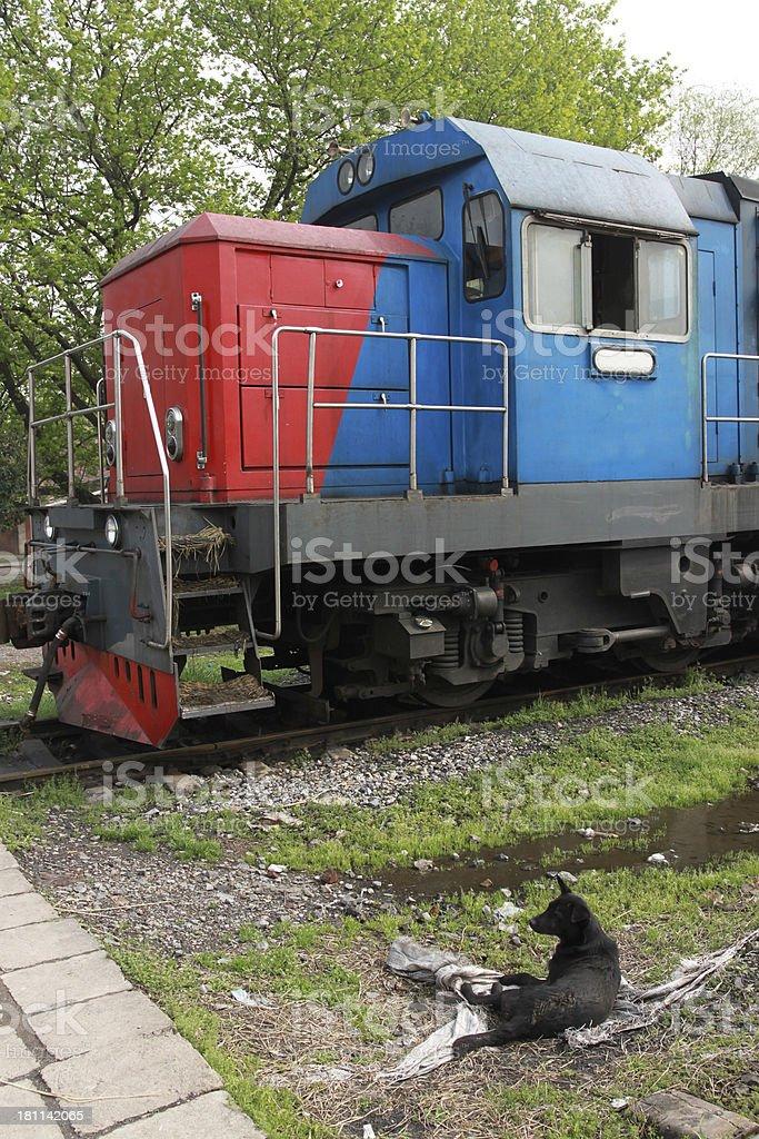 Old train and stray dog royalty-free stock photo