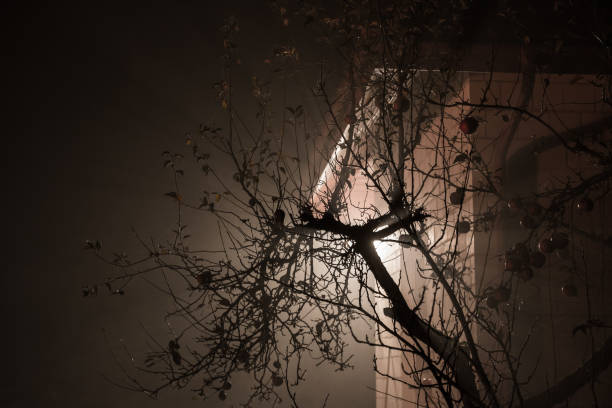 Old tree against building light in the foggy night – zdjęcie