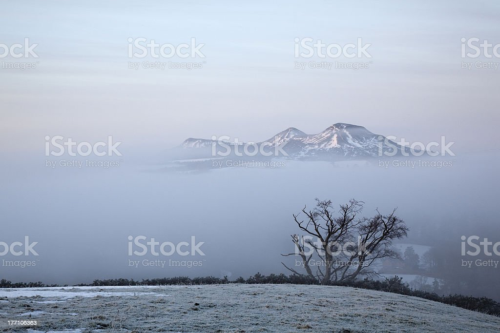 Old Tree and the Eildons stock photo