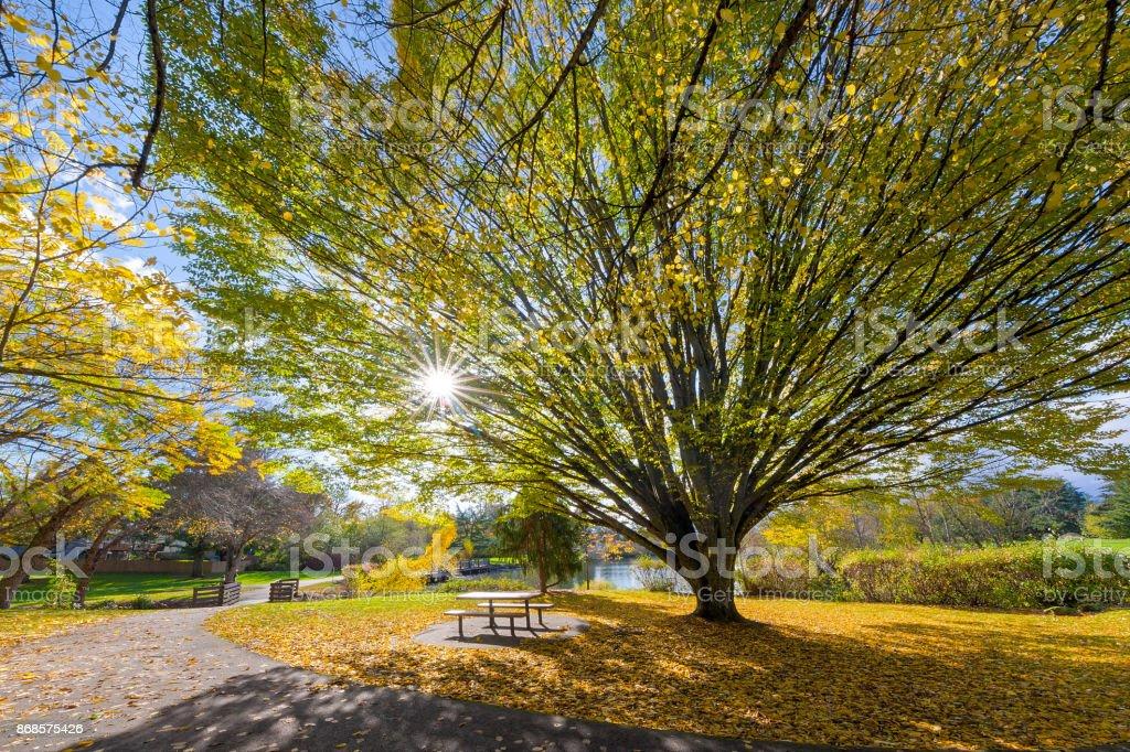 Alter Baum im Commonwealth Lake Park in Beaverton Oregon mit Sonne Sterne platzen Herbst Saison – Foto