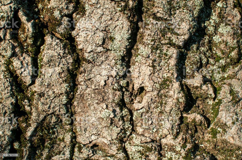 늙음 나무 나무껍질 클로즈업 - 로열티 프리 0명 스톡 사진