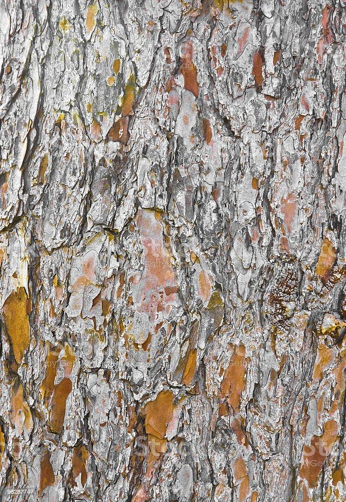 늙음 나무 나무껍질 royalty-free 스톡 사진