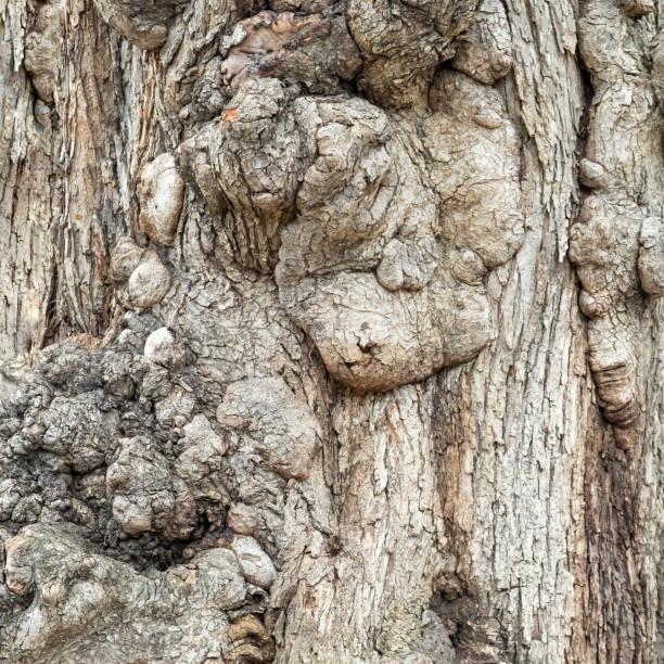 Vieux texture d'écorce d'arbre en arrière-plan - Photo