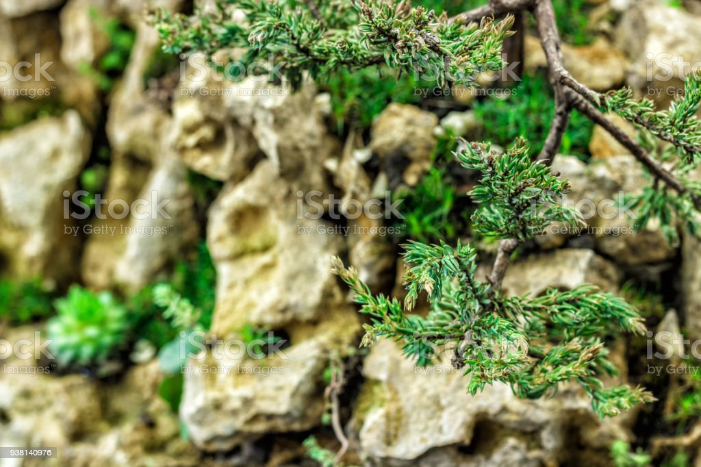Old Tree Bonsai Closeup For Sale Stock Photo Download Image Now Istock