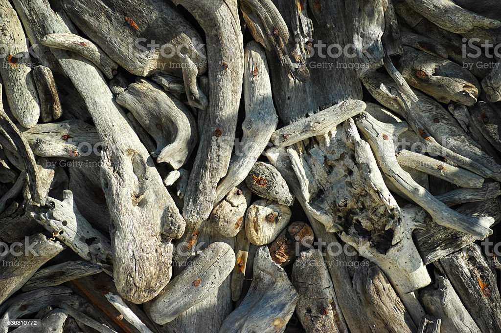 Old Tree Branchs Abstract Background stock photo
