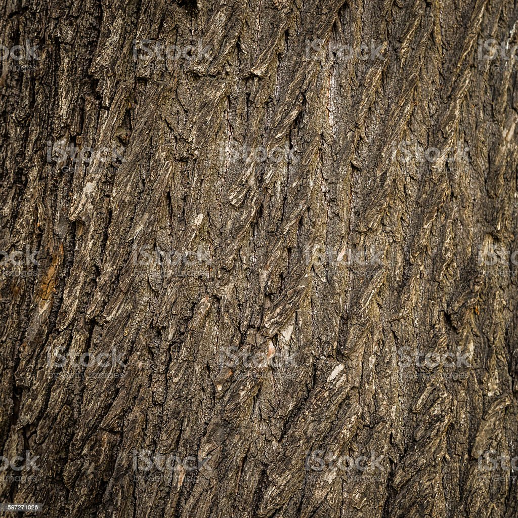 Old tree cracked bark background natural pattern Lizenzfreies stock-foto