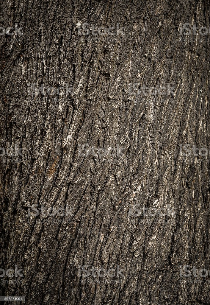 Old tree cracked bark background natural pattern royalty-free stock photo