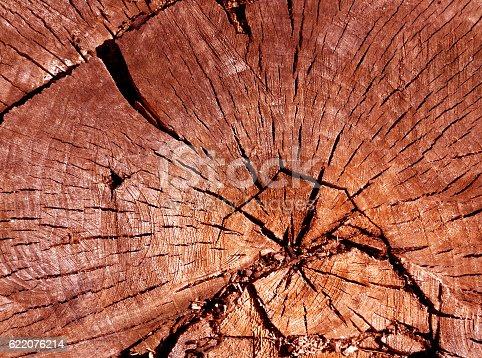 465559373 istock photo Old tree cut surface. 622076214
