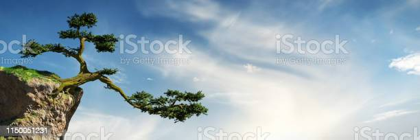 Photo of old tree growing on a rock in front of the sky, fantasy landscape, banner background