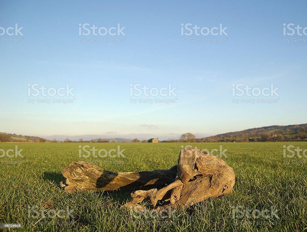 Vecchio albero in un campo di campagna foto stock royalty-free