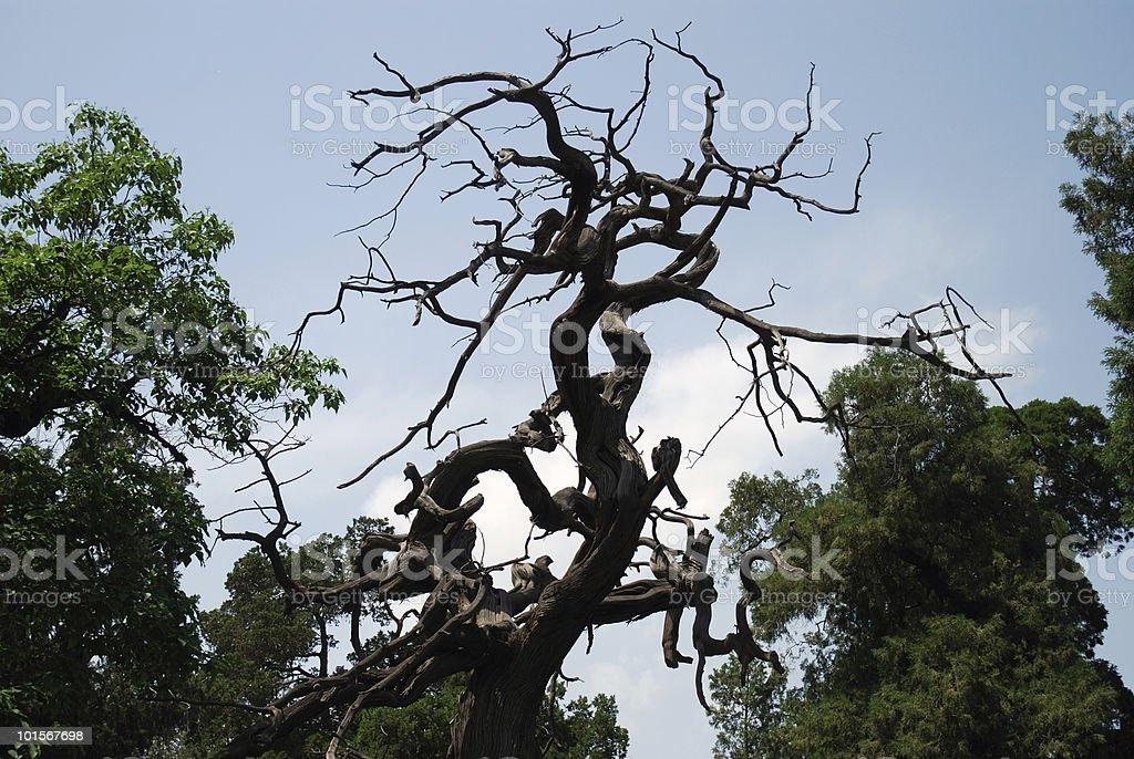 Old Tree in Beijing Forbidden City stock photo
