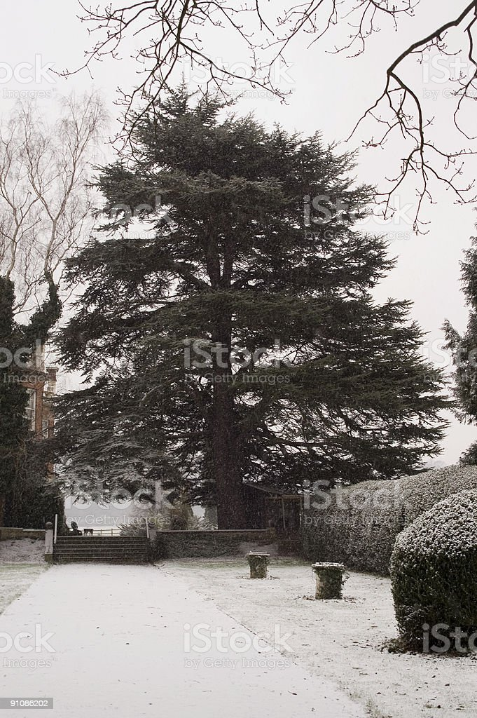 Old tree in snowy, wintery scene 1 royalty-free stock photo