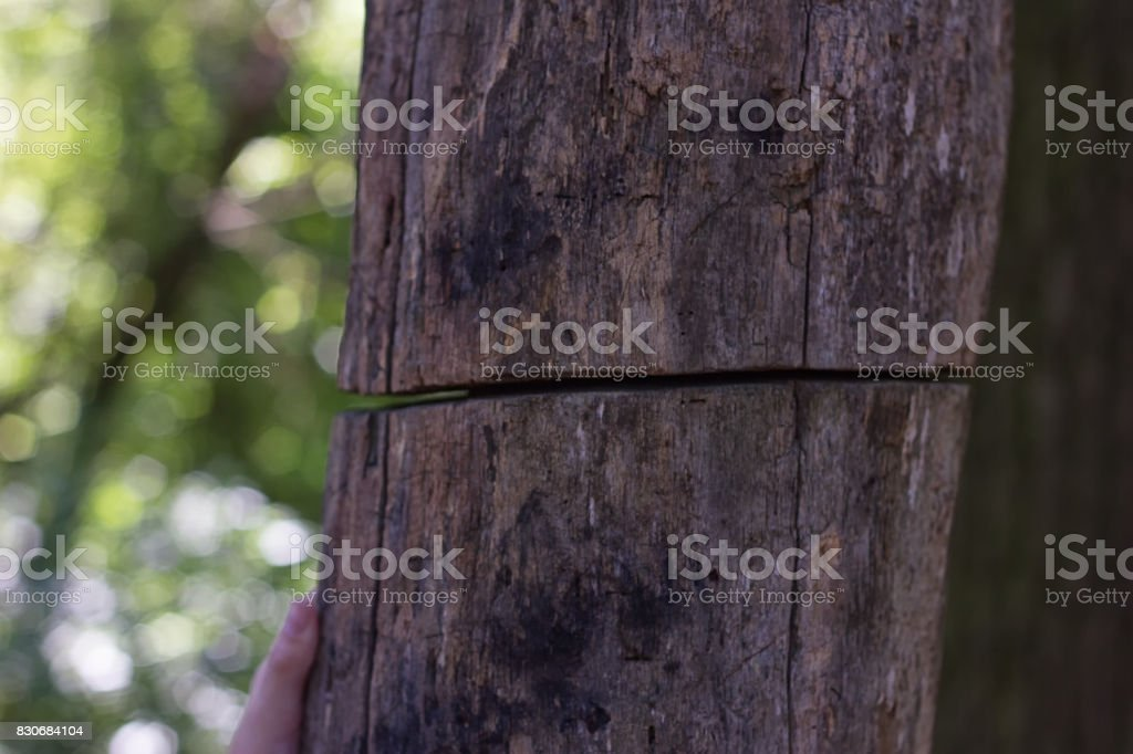 old tree is severed stock photo