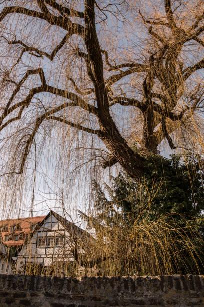 Alter Baum in der Nähe einer Steinbrücke des alten Teils der Stadt – Foto