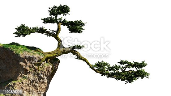 huge bonsai style tree growing on a rock, cutout on white ground