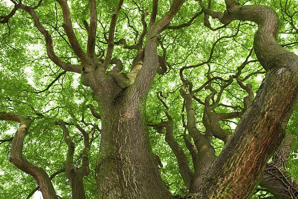 Alter Baum – Foto