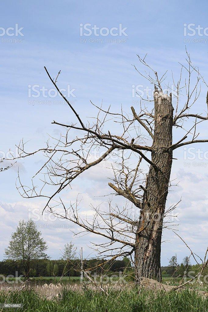 Vecchio albero foto stock royalty-free