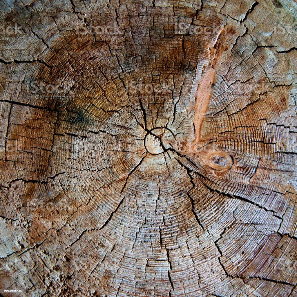 Anillos de los árboles viejos para fondo - foto de stock