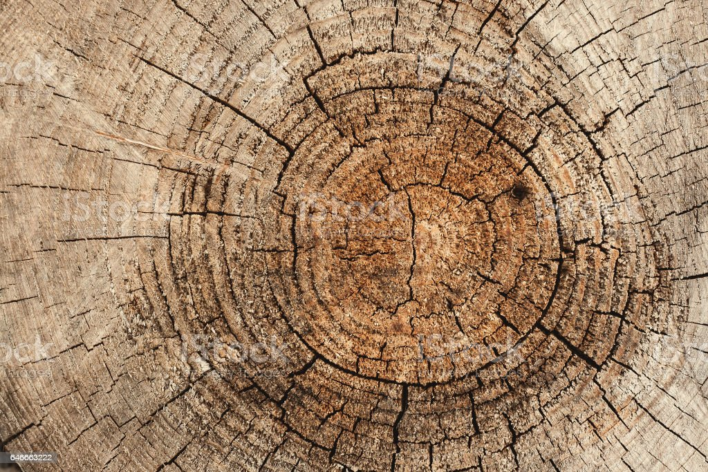 old tree rings stock photo