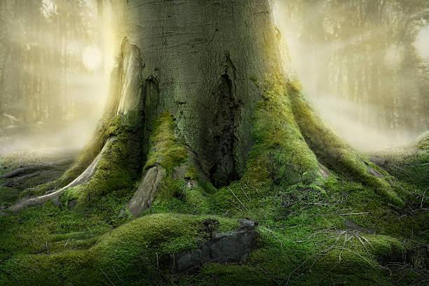 raízes de árvore - durabilidade imagens e fotografias de stock