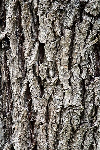 Old tree skin bark stock photo
