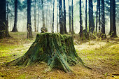 Old tree stump covered with moss in the coniferous forest