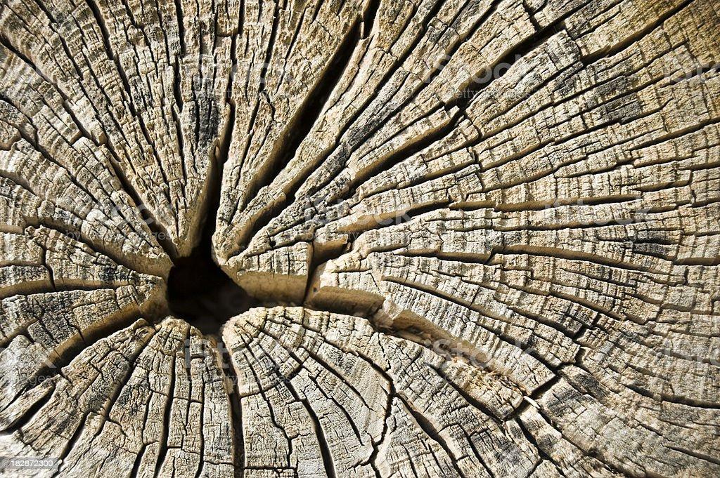 Old tree stump royalty-free stock photo