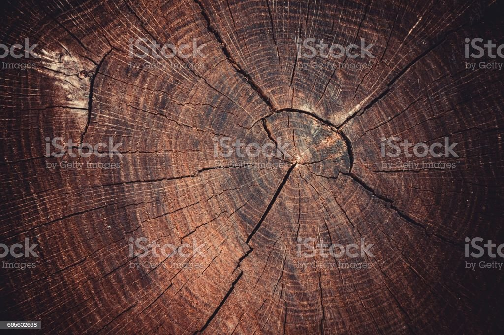 Old tree stump texture background. stock photo