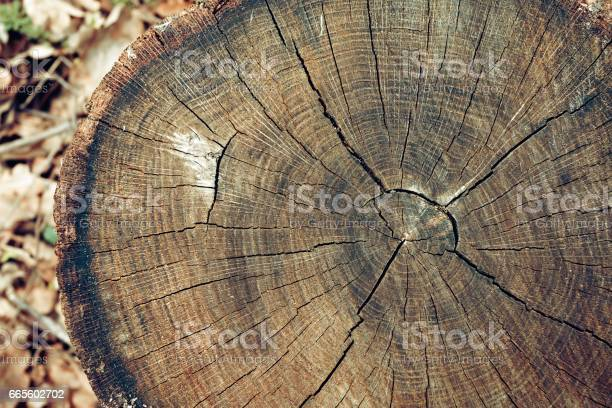 Photo of Old tree stump texture background.