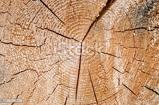 istock Old tree stump. Wooden. Rustic. Nature. Summer. 1139298729