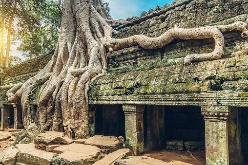istock Old Tree, Ta Prohm Temple, Angkor Wat, Siem Reap, Cambodia 592649432