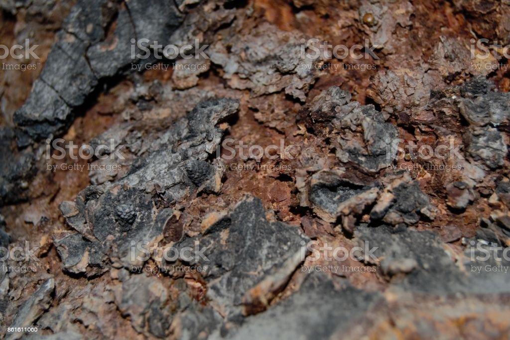 Old tree texture stock photo