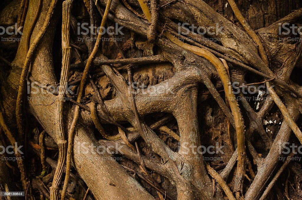 Old tree with roots texture horizontal background