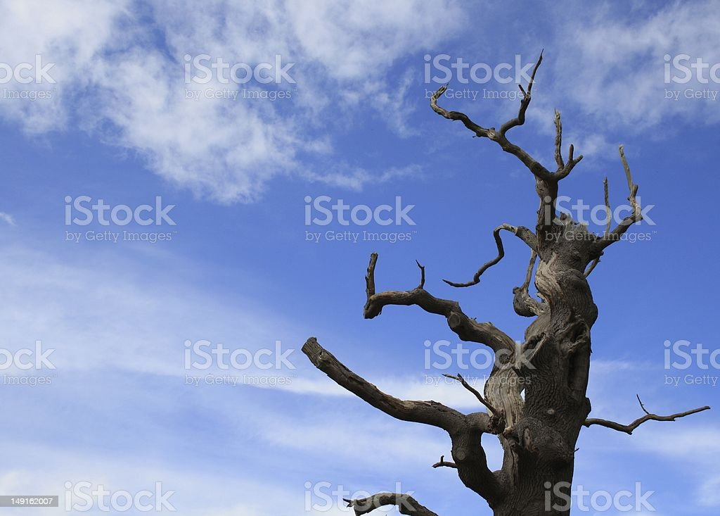 old tree wood with bright blue sky stock photo