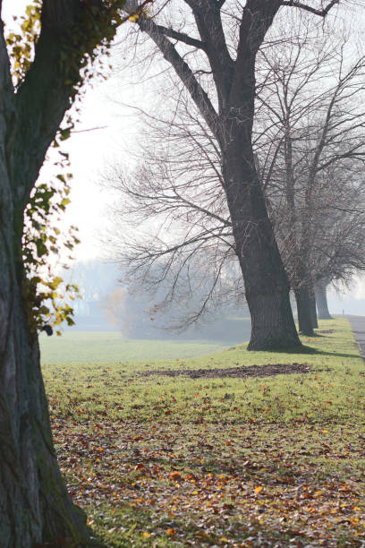 Old trees Old trees on a autumn day alias stock pictures, royalty-free photos & images