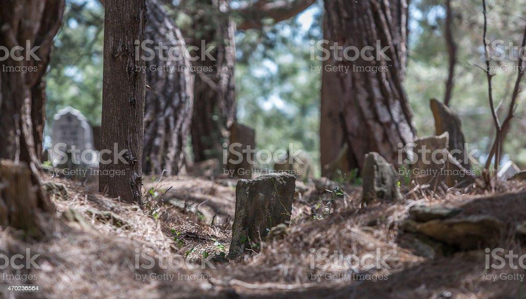 Old türkish cemetery in türkey stock photo