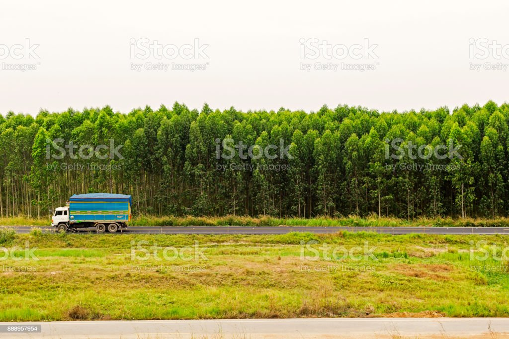 Old truck on the road with eucalyptus forest. stock photo