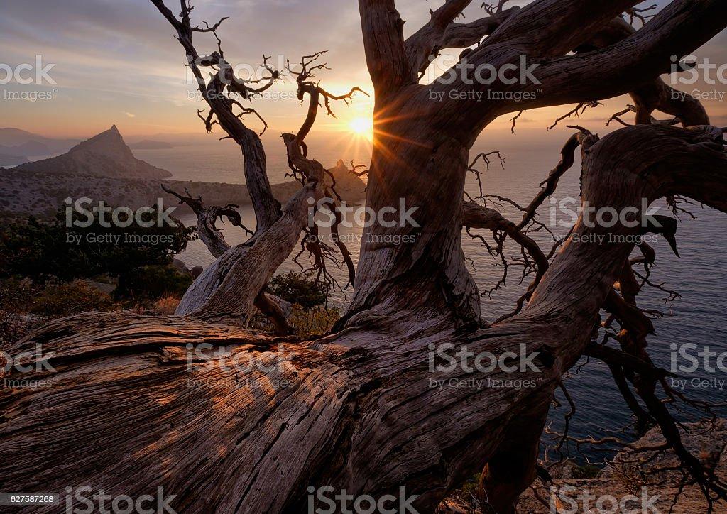 Old trunk above a precipice stock photo