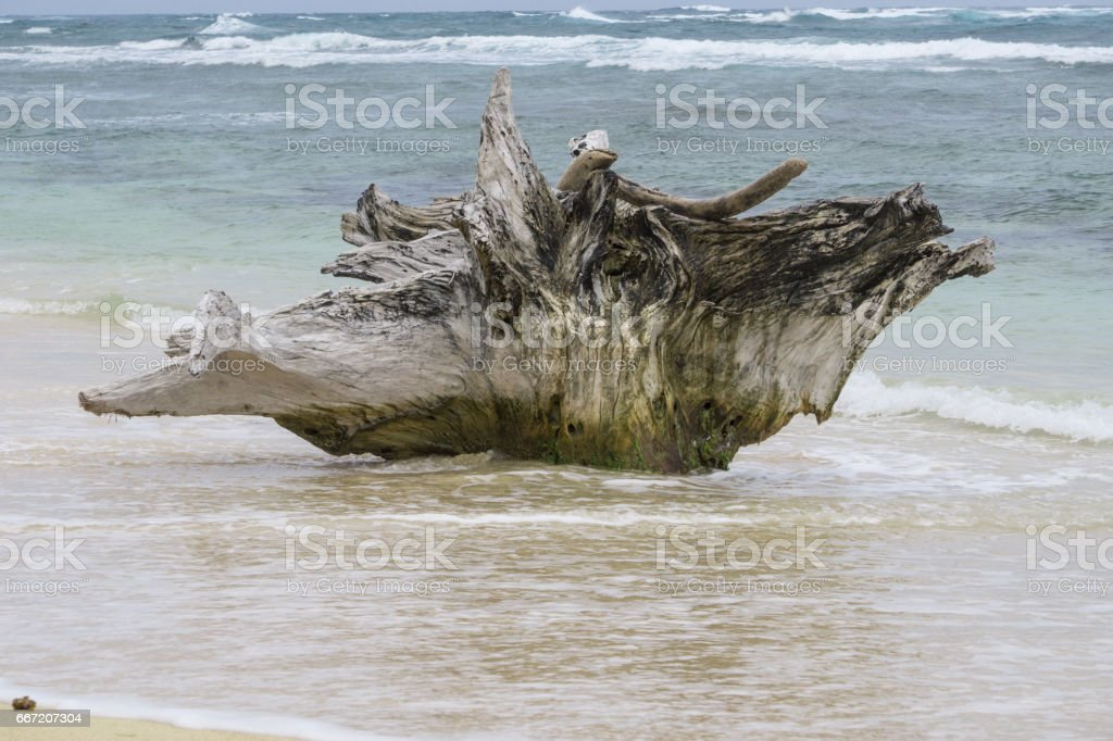 old trunks on beach from Corn Island, Nicaragua royalty-free stock photo