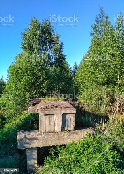 Oude Onvoltooide Smalspoorlijn Via Een Closeup Van De Moeras Bos Stockfoto en meer beelden van Antiek - Ouderwets