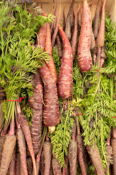 Old variety of carrots of red color stock photo