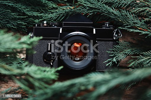 Old vintage film slr camera lying in green tree branches