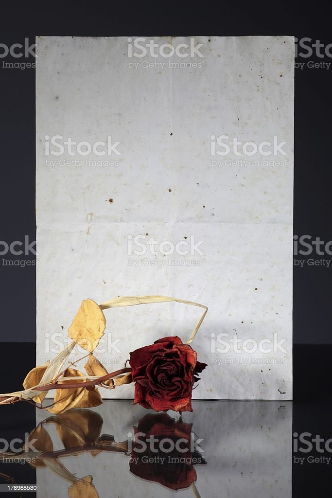 Old vintage paper page and wilted rose reflected royalty-free stock photo