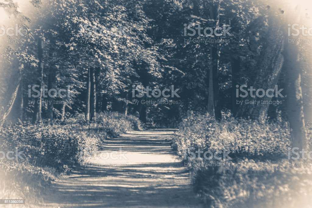 Old vintage photo. Forest park leaves road trees stock photo