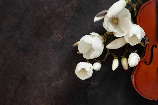 Violino velho e brances de florescência do Magnolia. Vista superior, close-up no fundo escuro do vintage - foto de acervo