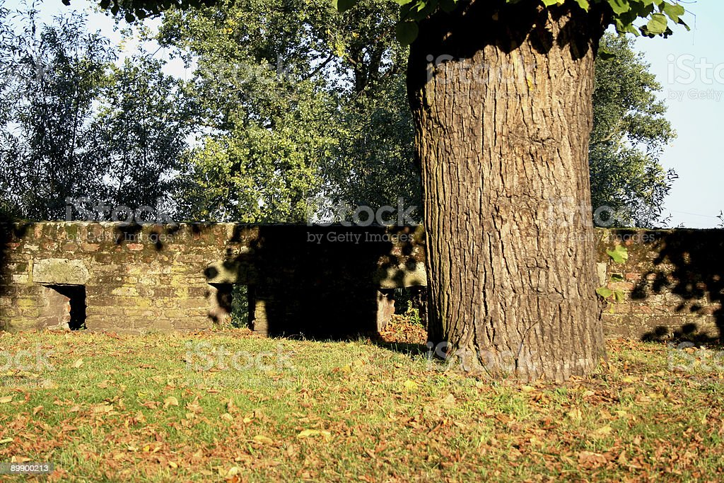 old wall and tree trunk royalty-free stock photo